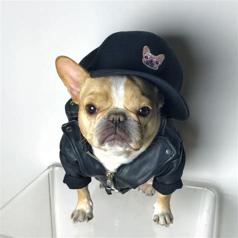 Official Chloe The Mini Frenchie Hat