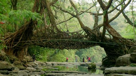 India's 'living bridges' made from rubber tree roots - BBC